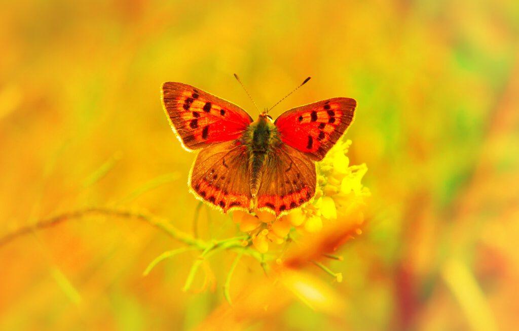 Agilität in Form eines Schmetterlings